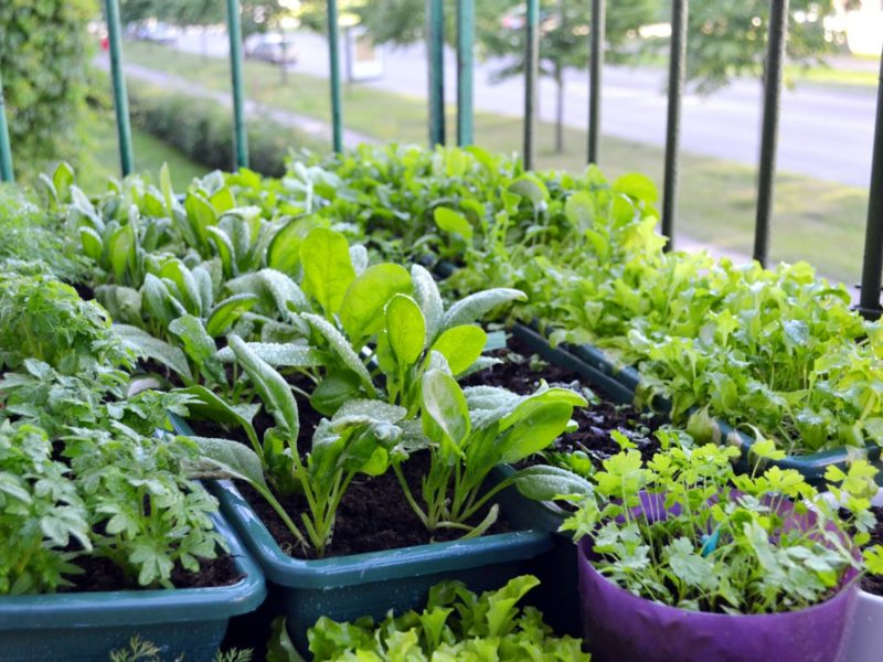 How To Enjoy Container Vegetable Gardening?